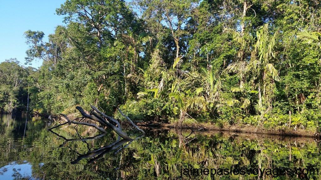 riviere noire tortuguero
